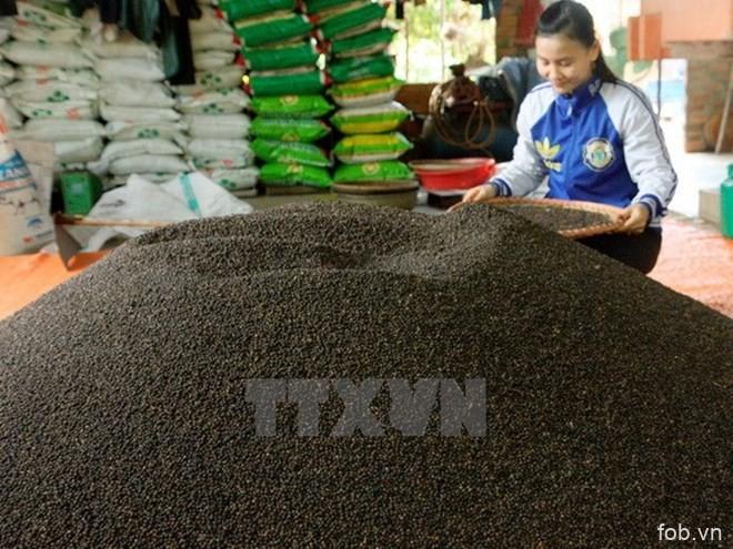 越南胡椒出口仍较为乐观