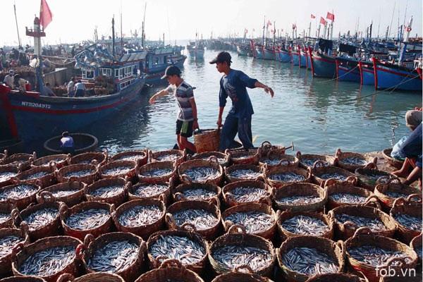 越南迈向建设负责任及可持续发展的渔业