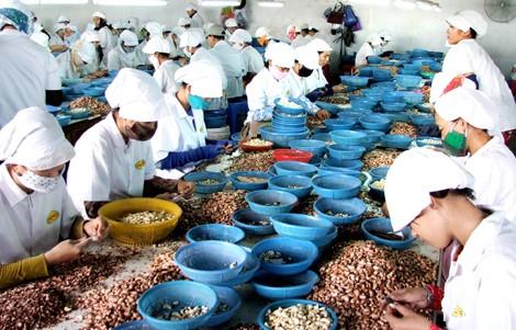 加大对中东-非洲市场的越南商品出口力度