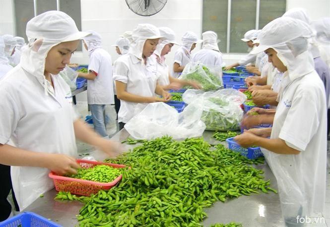 蔬果成为越南主力出口商品
